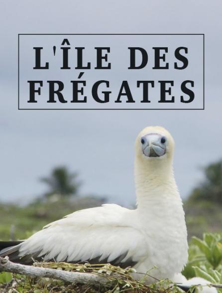 L'île des frégates