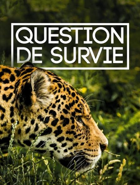 Question de survie *2016