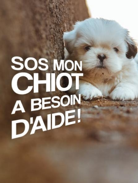 SOS mon chiot a besoin d'aide !